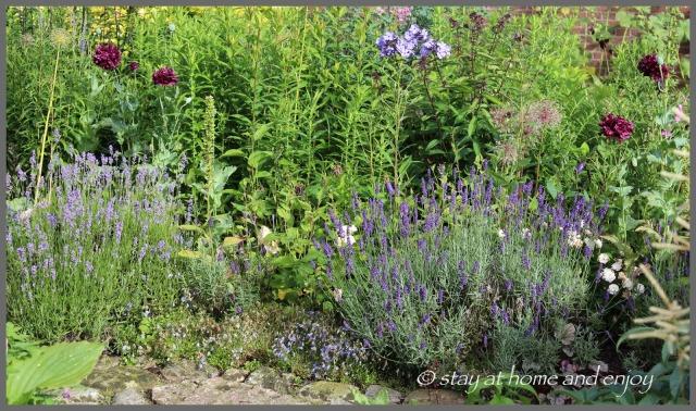 Lavendel im blau-weißen Garten - stay at home and enjoy