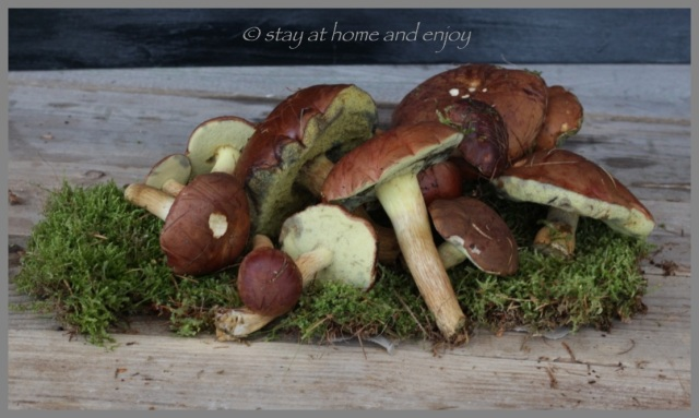 Pilze sammeln - stay at home and enjoy