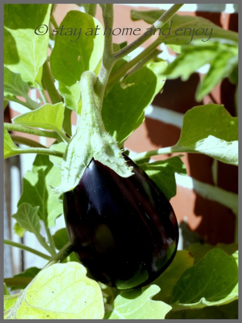 Aubergine im Topf - stay at home and enjoy