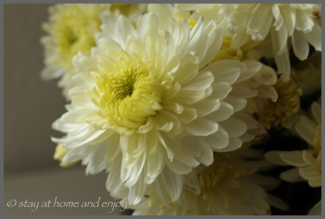Dekoriert mit Chrysantheme - stay at home and enjoy