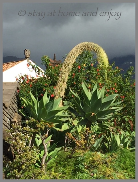 Unterwegs ... Madeira - stay at home and enjoy