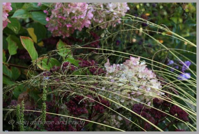 Septembergarten- 15 - stay at hpme and enjoy