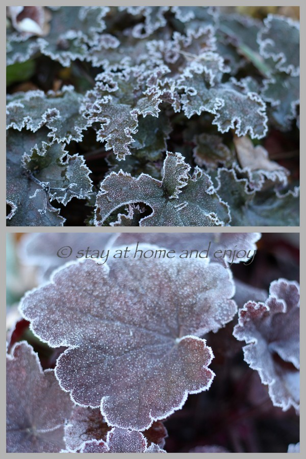 Der erste Frost10 - stay at home and enjoy