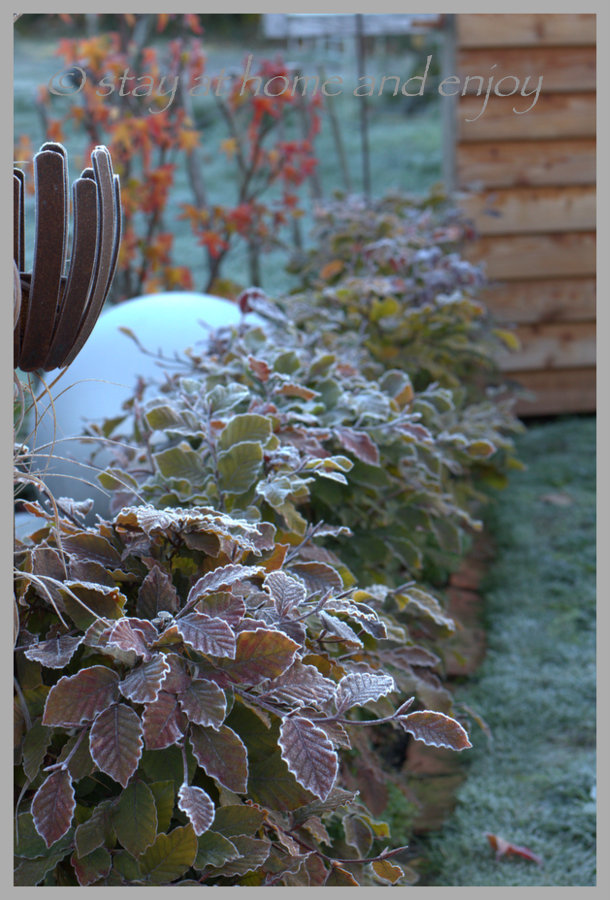 Der erste Frost6 - stay at home and enjoy